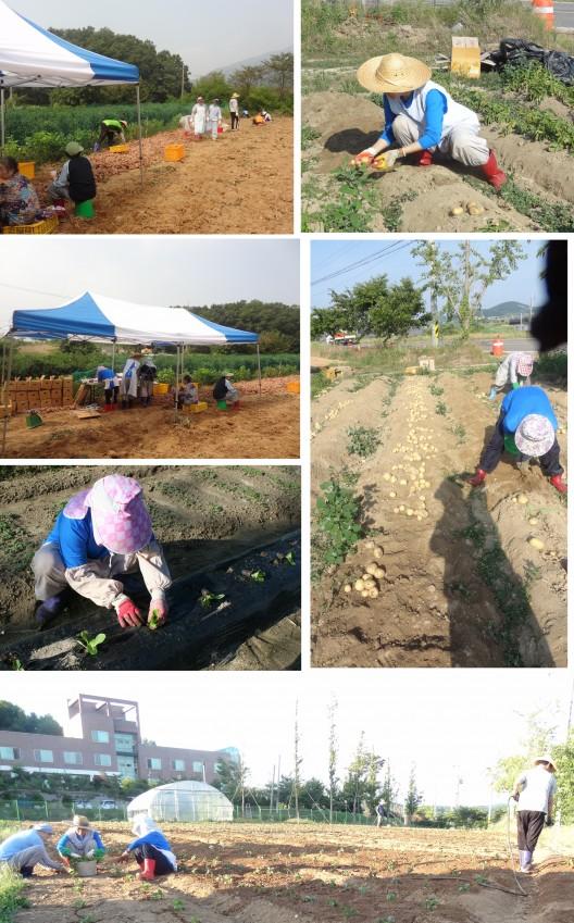 농사.jpg